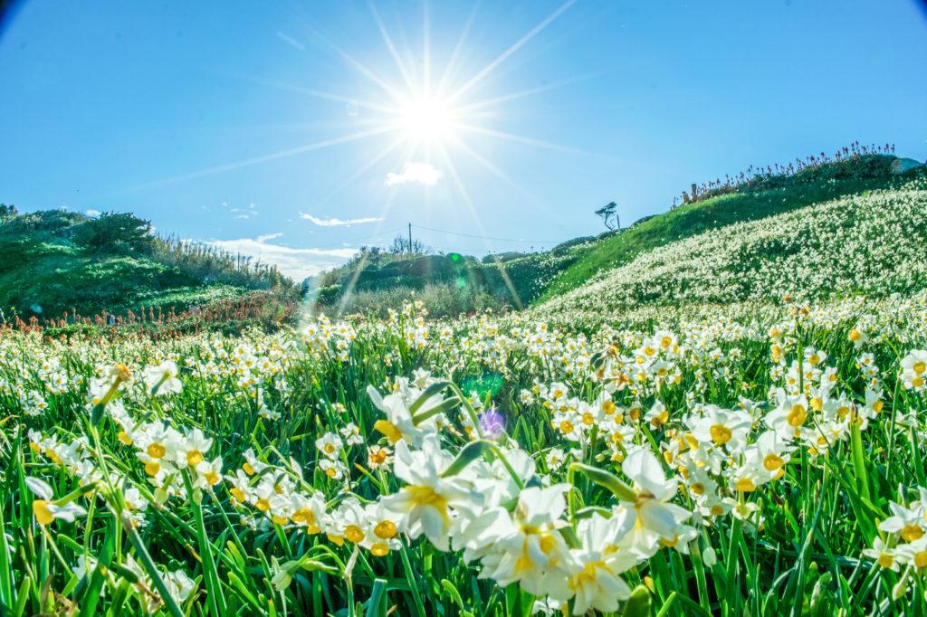 花と草とそら